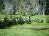 BUTTE MEADOWS 2010