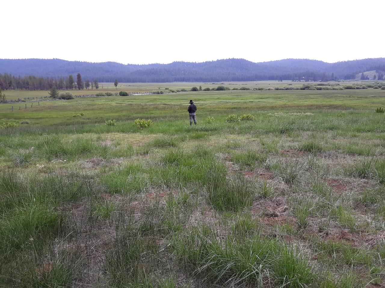 Fannani Meadows