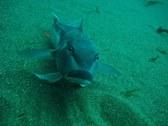 New Zealand Underwater