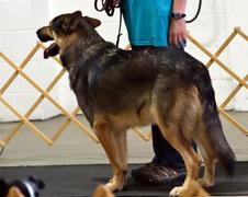Peoria 4H Dog Show 2