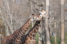 Asheboro Zoo 2011