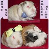 Gallery: Guinea Pig Fun