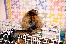 Cat-Proof Theme Cages by Kathy