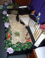 Butterfly Garden by Erin