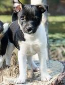 Bell & Ranger Puppies