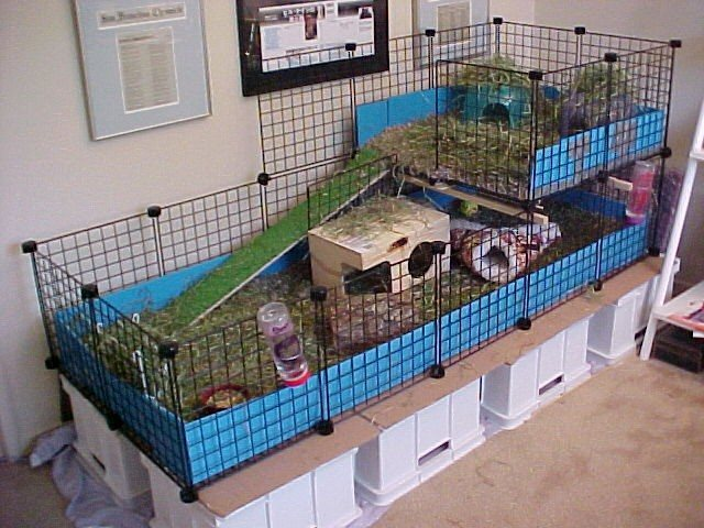 Ratteries on pinterest ferrets guinea pigs and guinea for Enclos lapin interieur