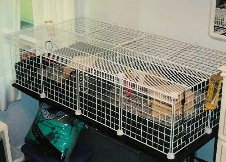 Cavy Cages - Closed Cube & Coroplast