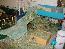 Cavy Cages - Ramps Made Easy
