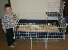 Cavy Cages - Grid Stands