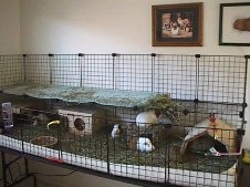 Cavy Cages - Linoleum Base