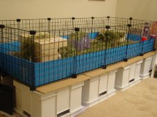 Cavy Cages - Open Cube & Coroplast Cages