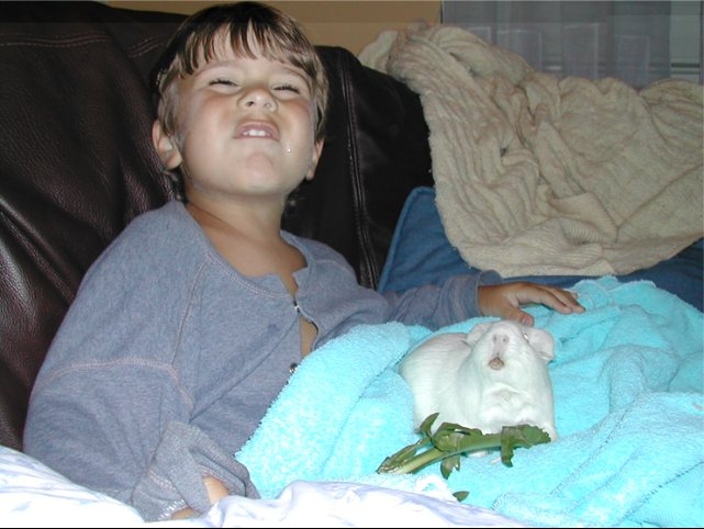 Guinea Pigs and Kids Cavies and Children