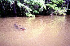 New Orleans Vacation - May, 2002