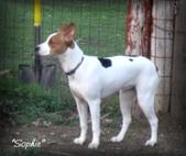 Elie x Rueger pups born 07/17/2012
