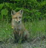 Animals seen in Maine