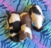 DEEP SPACE 9 Litter-3 weeks
