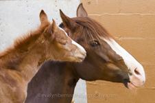 Horses of 2015