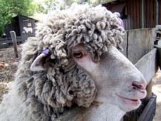 Shearing Shed & Beyond