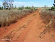Desert Tracks #2