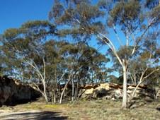 Goldfields Safari #4