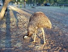 Public Gallery Photo Of the Day -- Australian Birds