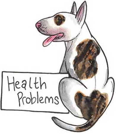 Rat Terrier & Labrador's Genetic Issues