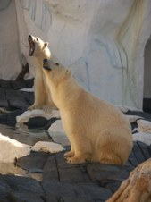 Polar Bear Treats