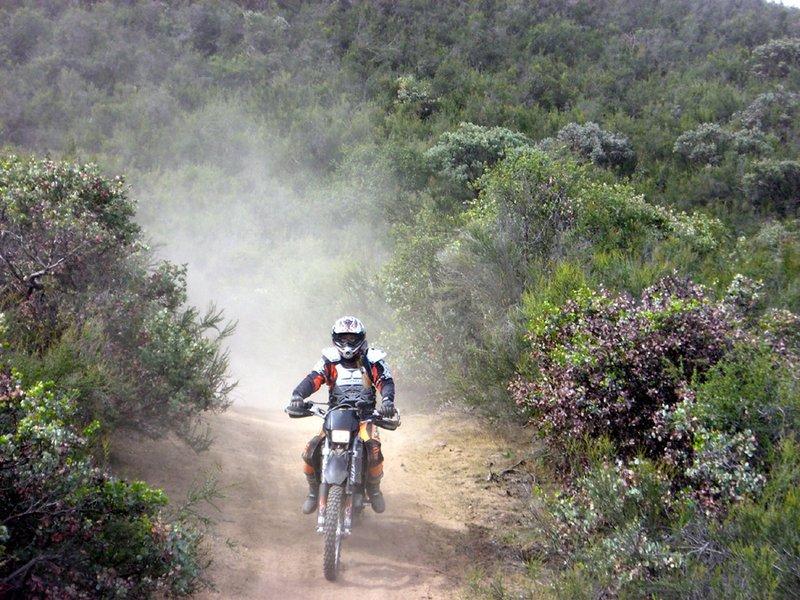 Diehards' Penguins Ride