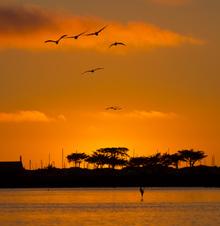 Elkhorn Slough at sunset