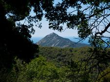 Flowers on Mt. Carmel hike