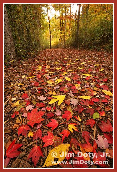 The Path, West Lake Nature Preserve. Portage, Michigan