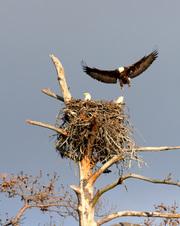 Eagles at Noxubee 2011