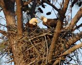 Proffitt's Porch Eagles, 2011