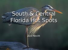 Florida Hot Spots