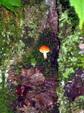Enlarge photo 35