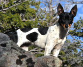 K2 Dogs Granted Retirement Status