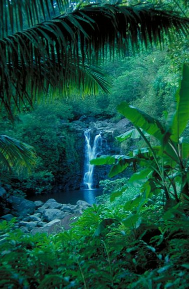 Hidden Waterfall on Road to Hana - Maui, Hawaii
