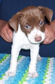 Maddie/Dillon Litter--ALL SOLD !!