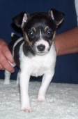 Sola/Dan Litter --ALL SOLD!