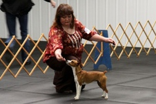 Tulsa Companion Dog UKC show