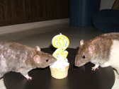 David & Stella's 2nd Birthday Party!