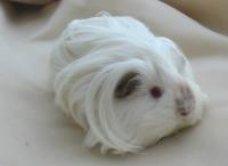 Nellie's Haircut!