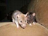 Random Photos 2006