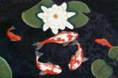 KOI POND