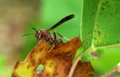 Public Gallery Photo Of the Day -- Insects & Closeups
