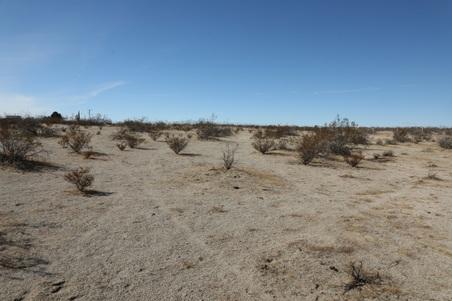 DW Desert Studio