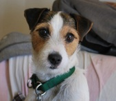 Molly O'Dolly- Adopted: )