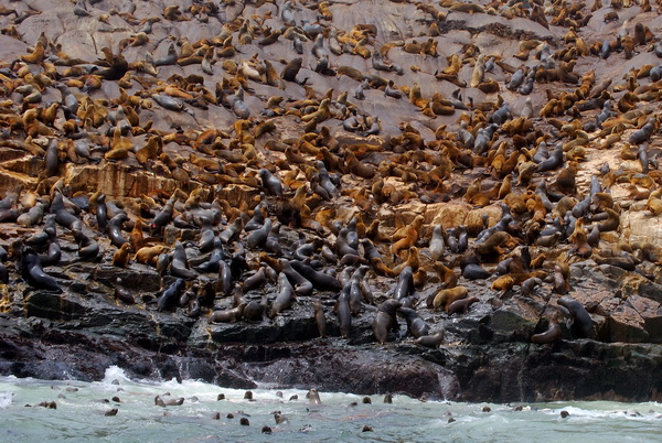 Excursion  islas  Callao  Lima Peru
