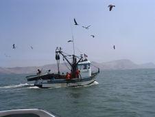 pesca vivencial/ deep & ned fishing