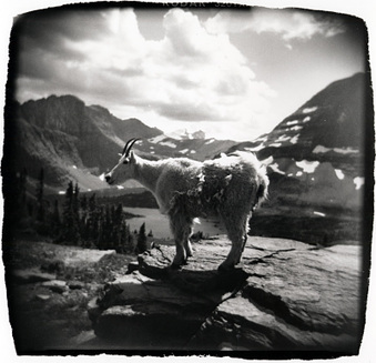 More Holga images